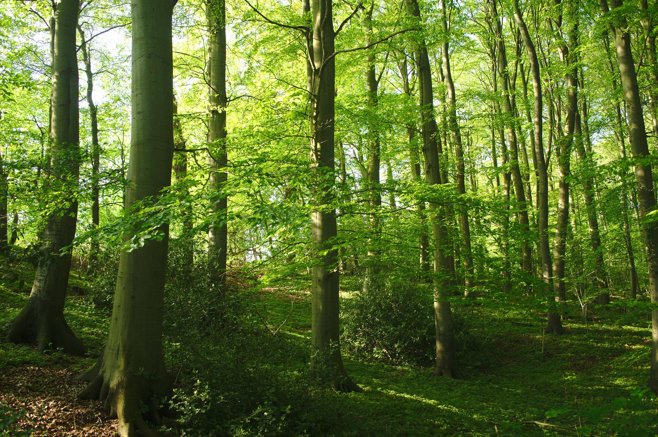 Udsigt i skoven