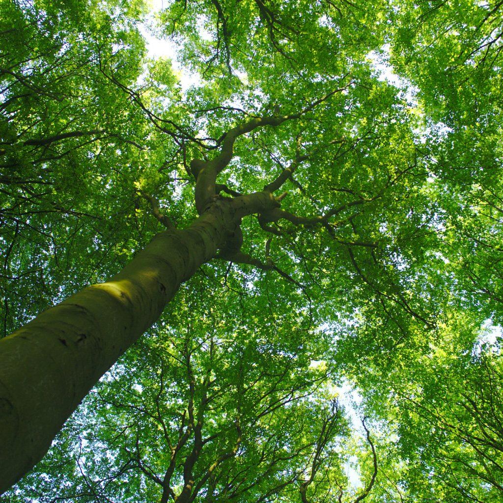 Et træ i skoven
